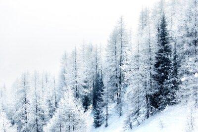 Vinilo Bosque cubierto de nieve