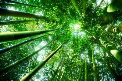 Vinilo bosque de bambú - concepto zen