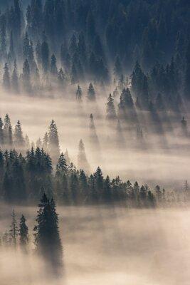 Vinilo Bosque de coníferas en las montañas de niebla