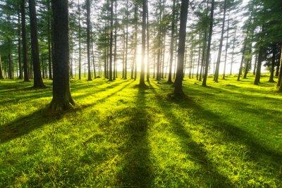 Vinilo bosque soleado