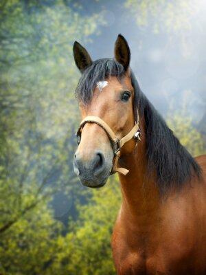 Vinilo Brown caballo en el paisaje de primavera