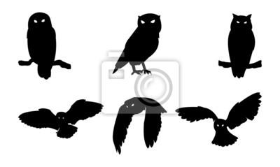 Vinilo Búho silueta del pájaro