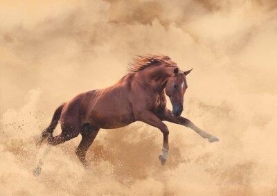 Vinilo caballo