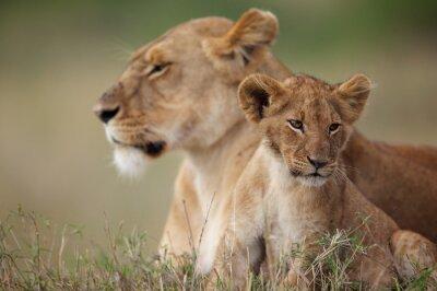 Vinilo Cachorro de león con su madre en el fondo