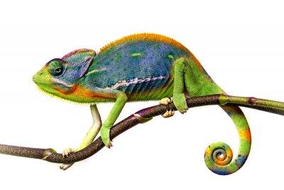 Vinilo camaleón