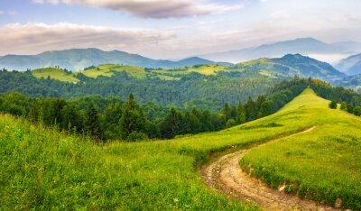 Vinilo Camino a través de bosque de coníferas en las montañas al amanecer