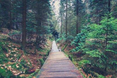 Vinilo Camino de senderismo dentro del paisaje forestal