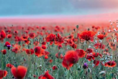Vinilo Campo de amapolas rojas en una puesta de sol