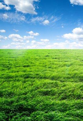 Vinilo Campo de hierba y cielo perfecto