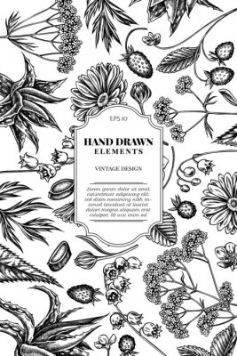 Vinilo Card design with black and white aloe, calendula, lily of the valley, nettle, strawberry, valerian