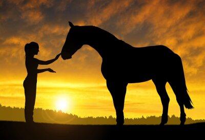 Vinilo Chica con un caballo al atardecer