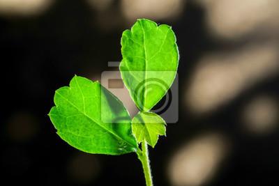 Vinilo Close up hoja verde con sombra de la luz del sol en el fondo, Eco conc