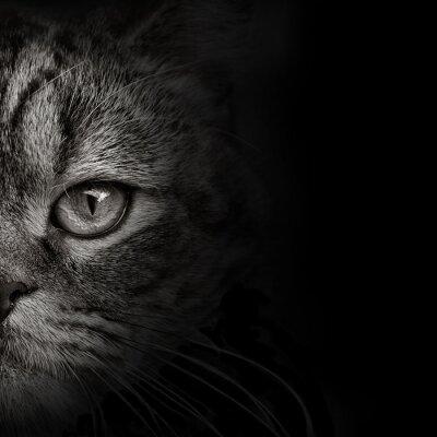 Vinilo Close-up oscuro del gato del bozal. vista frontal