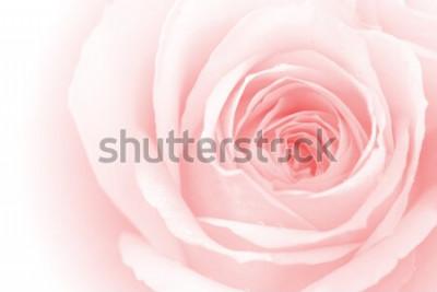 Vinilo Closeup coloridos pétalos de rosa para el fondo