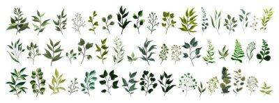 Vinilo Colección de vegetación hoja planta bosque hierbas hojas tropicales