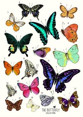 Vinilo Collection de Mariposas, conjunto dibujado a mano ilustración isolated.Vector