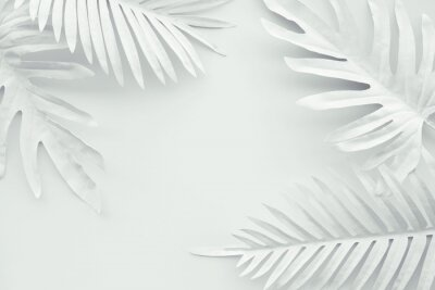 Vinilo Collection of tropical leaves,foliage plant in white color with space background.Abstract leaf decoration design.Exotic nature art
