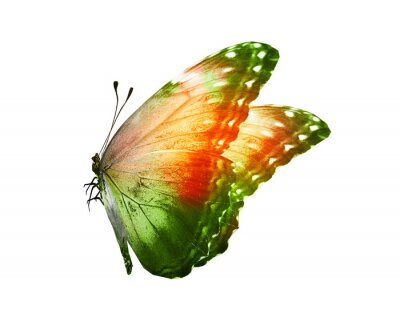 Vinilo Color butterfly , isolated on white background