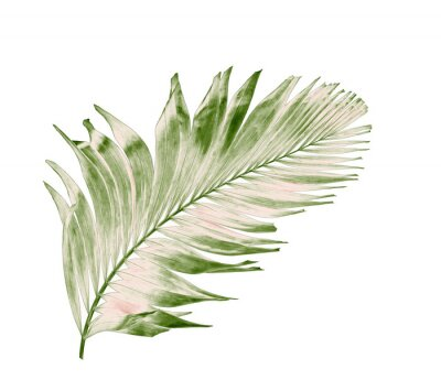 Vinilo concept summer with green palm leaf from tropical . frond floral leaves branches tree isolated on white pattern background. flat lay, top view.