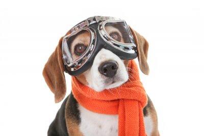Vinilo concepto de mascotas vacaciones, perro en vasos volando