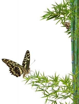 Vinilo concepto de naturaleza distensión zen