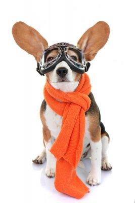 Vinilo concepto de viajes o aviador mascota de vacaciones