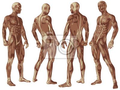 Conceptual de alta resolución 3d anatomía cuerpo humano con los ...
