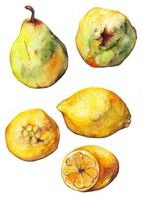 Vinilo Conjunto aislado de limón acuarela cítricos fruta de pera