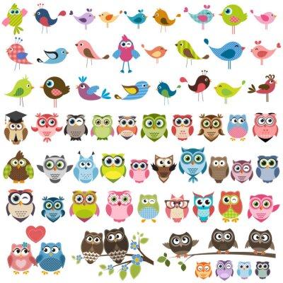 Vinilo Conjunto de dibujos animados aves coloridas y lechuzas
