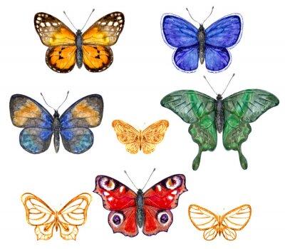 Vinilo Conjunto de mariposas de colores