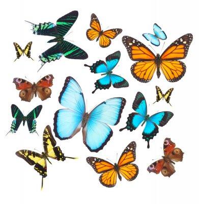 Vinilo Conjunto de mariposas tropicales