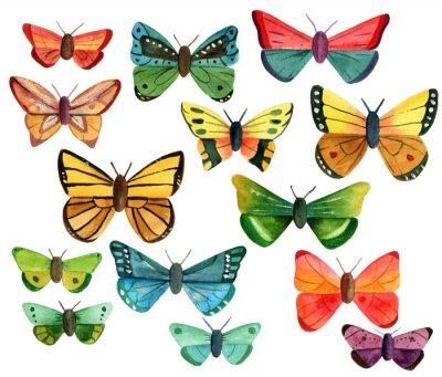 Vinilo Conjunto de muchas diferentes mariposas de acuarela sobre fondo blanco
