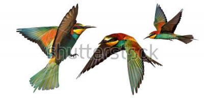 Vinilo conjunto de pájaros de colores en vuelo aislado sobre un fondo blanco