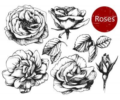 Vinilo Conjunto de rosas muy detalladas dibujados a mano. Vector
