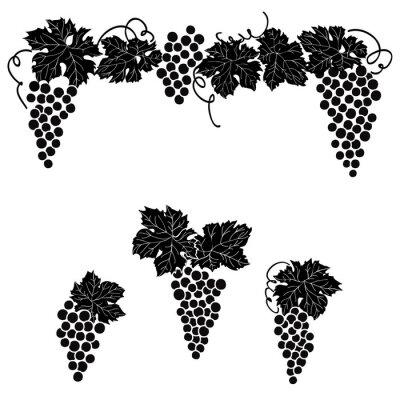 Vinilo Conjunto grabado uvas de la decoración del elemento de la decoración de la uva de la vid.