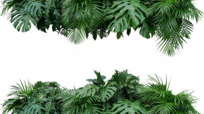 Vinilo Contexto floral de la naturaleza del arreglo floral del arbusto de la planta del follaje de las hojas aislado en el fondo blanco, trayectoria de recortes incluida.