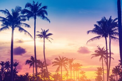 Vinilo Copy space of tropical palm tree with sun light on sky background.