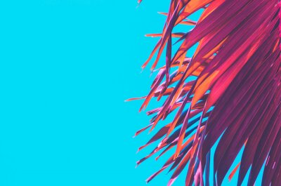 Vinilo Copy space pink tropical palm tree on sky abstract background. Summer vacation and nature travel adventure concept.