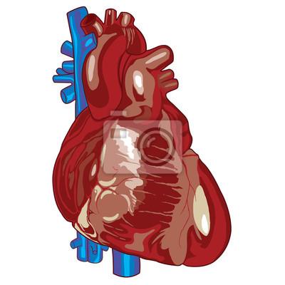 Corazón humano 01 vinilos para portátiles • vinilos para la pared ...