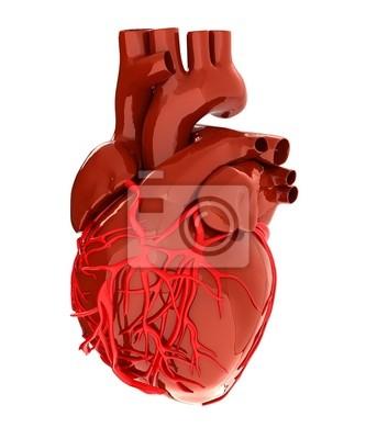Corazón Humano Vinilos Para Portátiles Vinilos Para La Pared