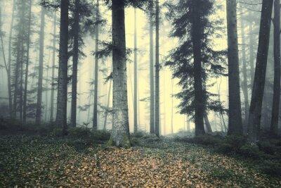 Vinilo Cuento de hadas brumoso hermoso del árbol de bosque. Luz brumosa mágica en bosque.