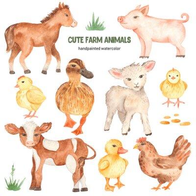 Vinilo Cute farm animals horse, pig, lamb, calf, duck, duckling, watercolor chick