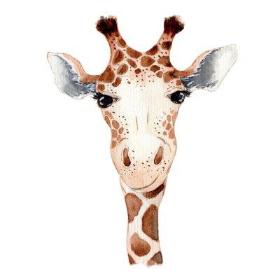 Vinilo Cute giraffe cartoon watercolor illustration animal