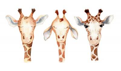 Vinilo Cute giraffe cartoon watercolor illustration animal set
