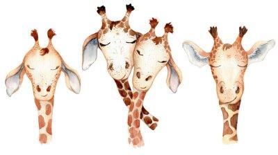 Vinilo Cute giraffes couple cartoon watercolor illustration animal set