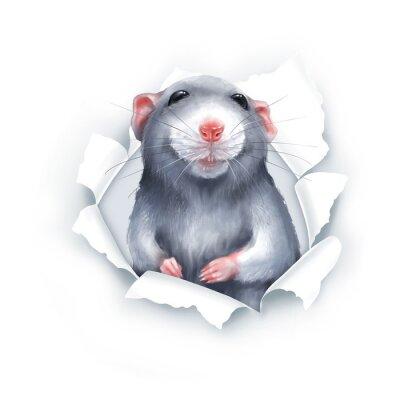 Vinilo Cute gray cartoon rat, paper breakthrough, digital painting