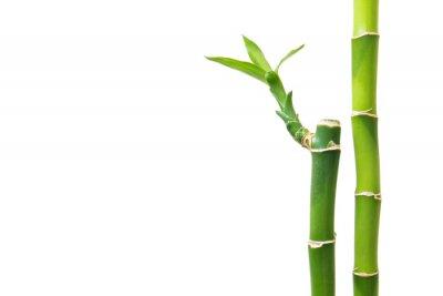 Vinilo De bambú fresco aislado en el fondo blanco