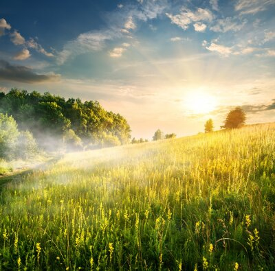 Vinilo De la mañana sobre campo floreciente