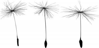 Vinilo de tres semillas de diente de león negro silueta aislados en blanco
