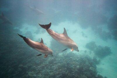 Vinilo Delfín bajo el agua